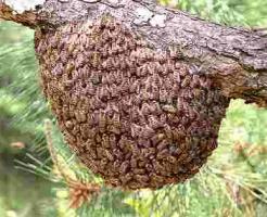 蜂の巣駆除の方法まとめ