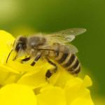 ミツバチの蜂の巣を作らせない方法