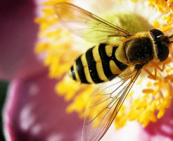 なる 夢 に に 蜂 そう 刺され