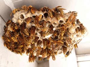 蜂の巣を作らせない方法 スプレーなどまとめ