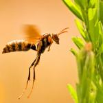 アシナガバチの蜂の巣を作らせない方法