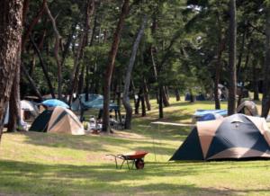 長野県キャンプ場おすすめ人気ランキング